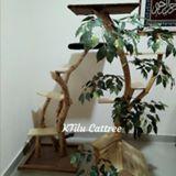 ktilucattree