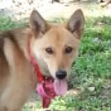fox1357924680