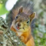 squirrel_popshop