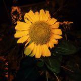 glo0my.daisy