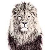 lioncitystore
