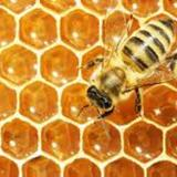 besthoneybees