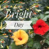 brightdayph