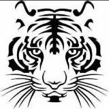 lionshop_co
