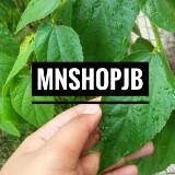 mn_shop_jb