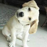 puppy821