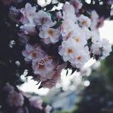 vlaura_luna