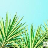 oakplant