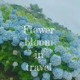 flowerbloomintravel