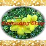 emmazing_shop
