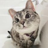 baybeecat