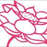 lotusflower317