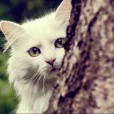 clara_nature