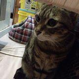 minions_h