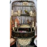 birdcage81