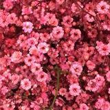 flowerkidss
