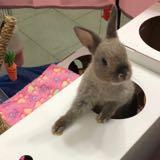 bunnies_playground