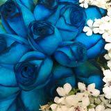 roserose_blue