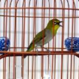 birdthebird