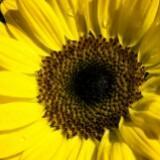 sunshine_chic