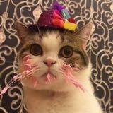 kitty212