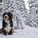 snowy128