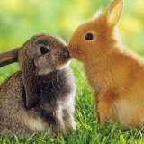 cute_rabbitt