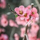 blossom217