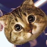 cat.fish0704