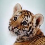 savage.tigress