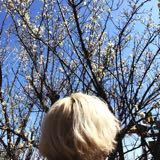blossomliang
