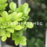 cleanfreshsg