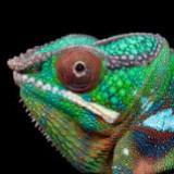 reptile_house