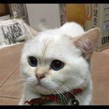 catnose