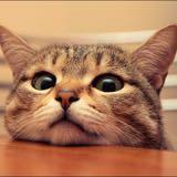 babykittenbabycat