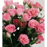 pinkrose786
