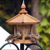 sparrowparadize
