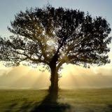 treeland31