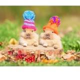bunny_sweety