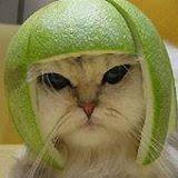 funny.cat