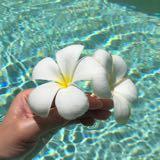daisy_the_flower