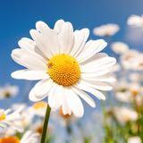 flowerkid