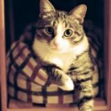 happycat905