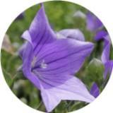 purpleshoppeph