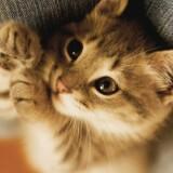 catlover_shop
