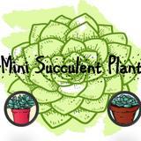 minisucculentsg