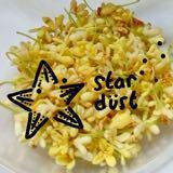 stardust_mini.crafter