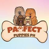 pawfectpuppiesph