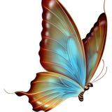 butterfly_store