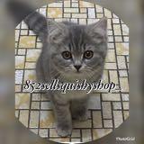 kittykitty2004
